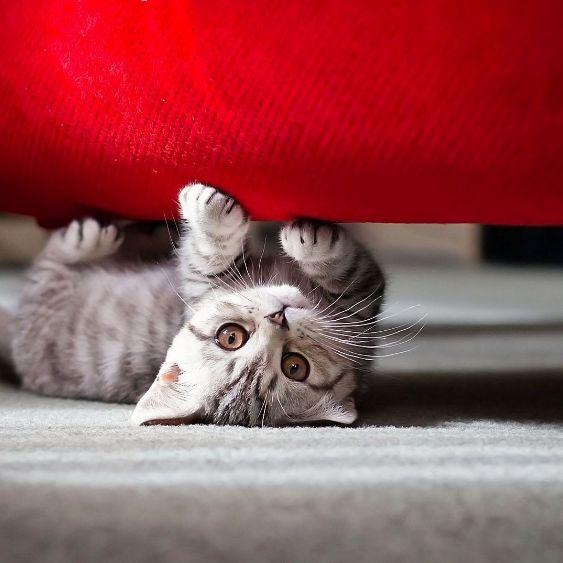 Без кота жизнь не та